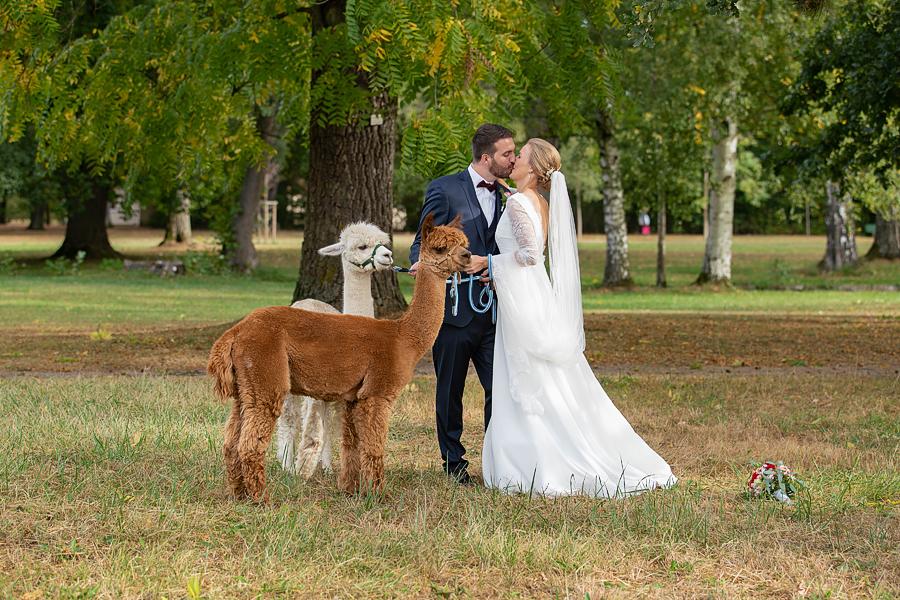 Hochzeitsfotograf Schoßpark Werneck, Alpakas